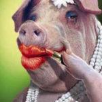 Fast Websites VS Pretty Pigs